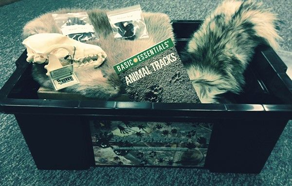 Safari Club International Skull and Fur Education Kit