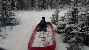 Christmas Tree sled riding
